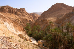 An oasis in the mountainous part of the Sahara Royalty Free Stock Photo