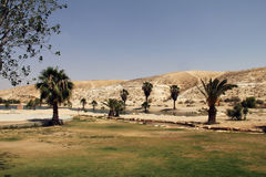 Oasis in the Negev Desert Royalty Free Stock Image