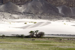 Oasis in nubra valley cold desert Royalty Free Stock Photography