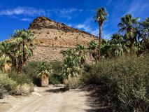 Moutnain Oasis 2. Oasis at Palm Canyon, Palm Springs, California Stock Photography