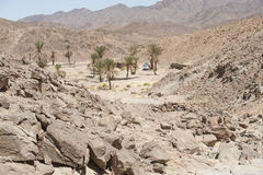 Oasis with palm trees in an  desert valley Stock Image