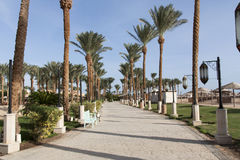 An oasis of palm trees and greenery photo. Embankment along the beach in Makadi, Egypt Stock Photography