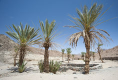 Oasis with palm trees in an isolated desert valley Royalty Free Stock Photos