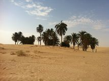 Oasis in the Sahara desert royalty free stock image