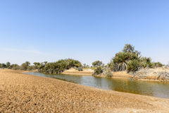Oasis with pond in desert (Oman) Royalty Free Stock Images