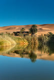 Oasis reflections Royalty Free Stock Images