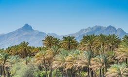 Oasis, on the road to Nizwa, Oman stock photo