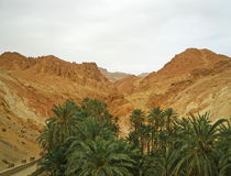 Oasis in Sahara desert. Tunisia Royalty Free Stock Image