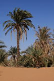 A Oasis in the Sahara Stock Photo