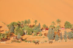 Oasis in Sahara desert Royalty Free Stock Image