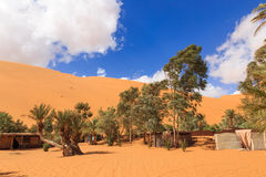 Oasis in the Sahara desert Stock Images