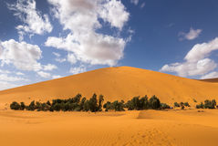 Oasis in the Sahara desert Stock Photography