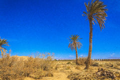 Oasis. In the Sahara desert in Biskra region in Algeria Stock Photos