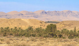 Oasis. In the Sahara desert in Biskra region in Algeria Royalty Free Stock Photography