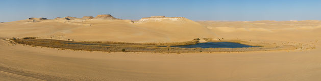 Oasis in Sahara desert in Egypt Stock Photography