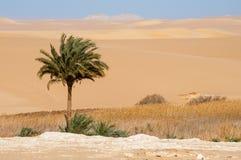 Oasis in Sahara desert in Egypt Royalty Free Stock Image
