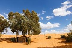 Oasis in the Sahara desert Royalty Free Stock Photos