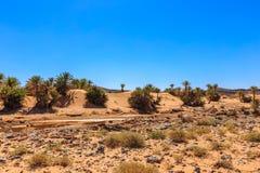 Oasis in the Sahara desert Royalty Free Stock Photo