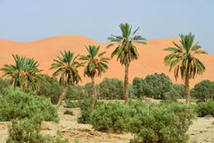 Oasis in Sahara Desert Royalty Free Stock Photography