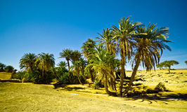 Oasis in the Sahara desert in Morocco. With palm trees Royalty Free Stock Image