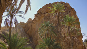 An oasis in the Sahara desert. Royalty Free Stock Images