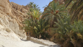 An oasis in the Sahara desert. Stock Image