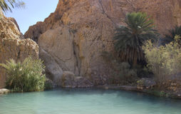 An oasis in the Sahara desert. Royalty Free Stock Image