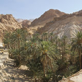 An oasis in the Sahara desert. Royalty Free Stock Photography