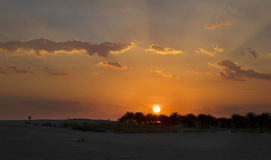 An oasis in the Sahara. Sunset in the desert. Royalty Free Stock Photography