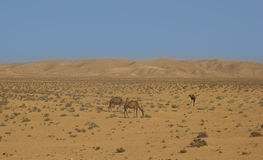 An oasis in the Sahara desert. Stock Photos