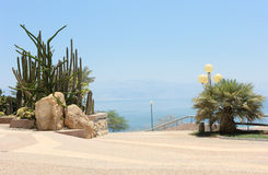 Oasis on the shore of the Dead Sea Royalty Free Stock Image