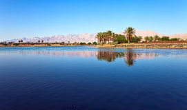 Oasis in the south of Israel Stock Photo