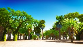 Oasis in Morocco Royalty Free Stock Photography