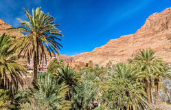 Oasis of the Todra River at Tinghir, Morocco. Oasis of the Todra River at Tinghir in Morocco royalty free stock photo