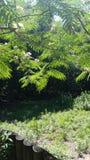 Oasis tropical fotos de archivo libres de regalías
