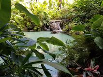 Oasis tropicale photo stock