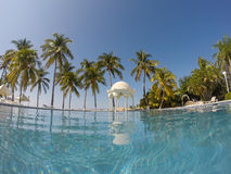 Oasis tropicale Photos stock