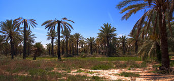 Oasis, Tunisia Royalty Free Stock Photos