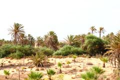 Oasis in Tunisia Royalty Free Stock Photography