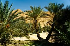 Oasis with two palm trees in front Royalty Free Stock Photography