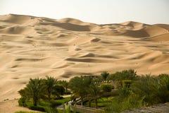 Oasis verde en el medio de un desierto de la arena Fotos de archivo libres de regalías