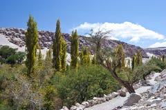 Oasis verte luxuriante dans une vallée de désert Photographie stock