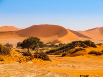 Oasis withe green trees in the middle of red dunes Stock Photo