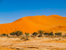 Oasis withe green trees in the middle of red dunes Stock Photos