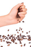 Oasted coffee beans pouring, Stock Photography