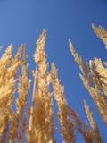 oat Royaltyfria Foton