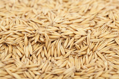 Oat Royalty Free Stock Photo