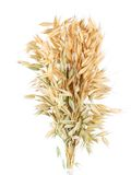 Oat. Isolated on a white background Stock Photography