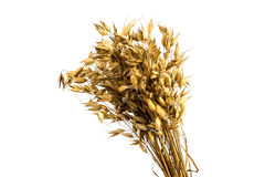 Oat bunch Royalty Free Stock Image