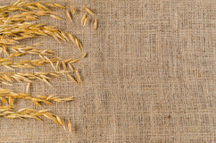 Oat cereal grain on sackcloth. Agriculture product Royalty Free Stock Photography